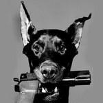 Пес-гипнотизер
